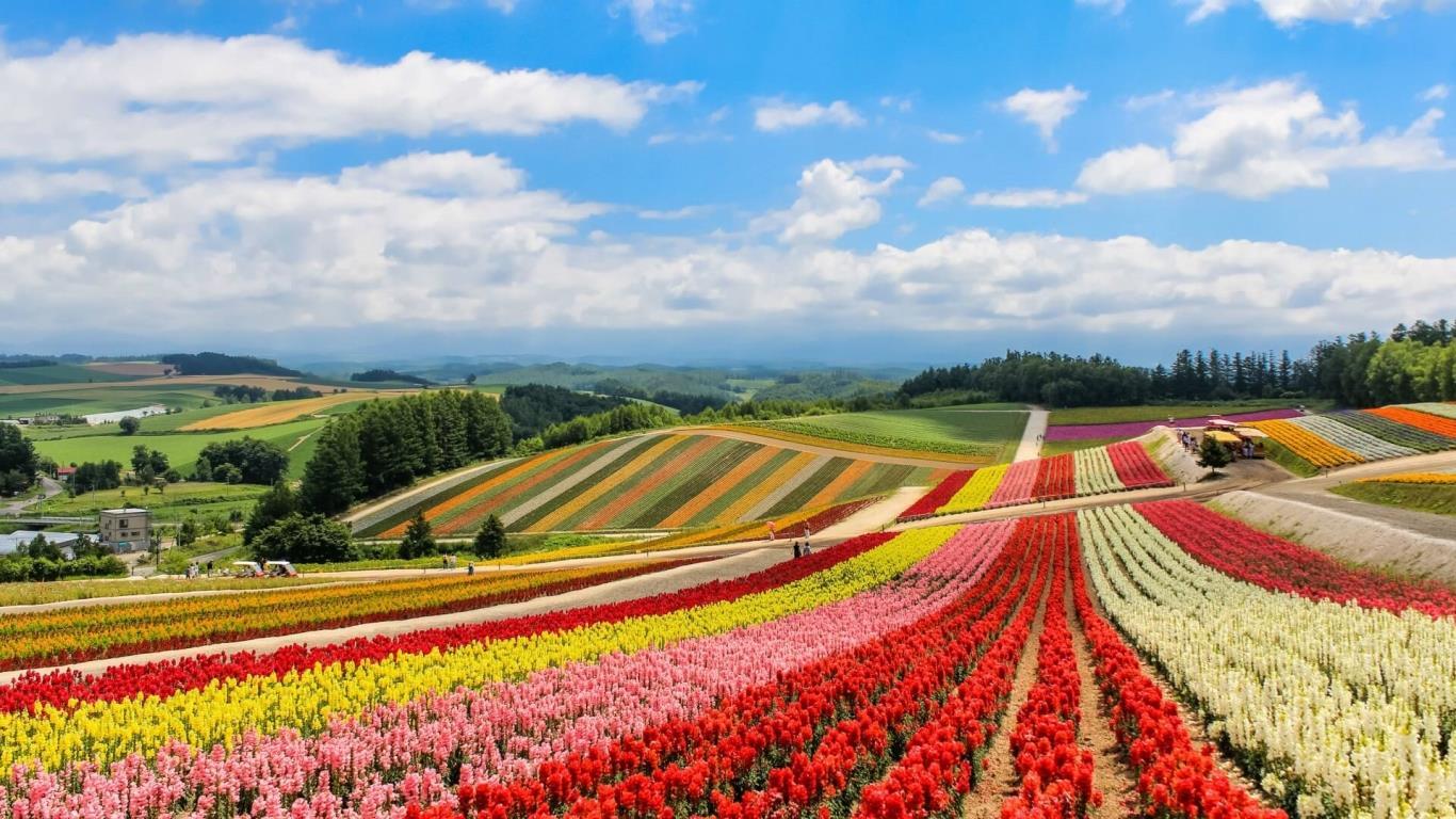 Xin visa Nhật Bản khó hay dễ?